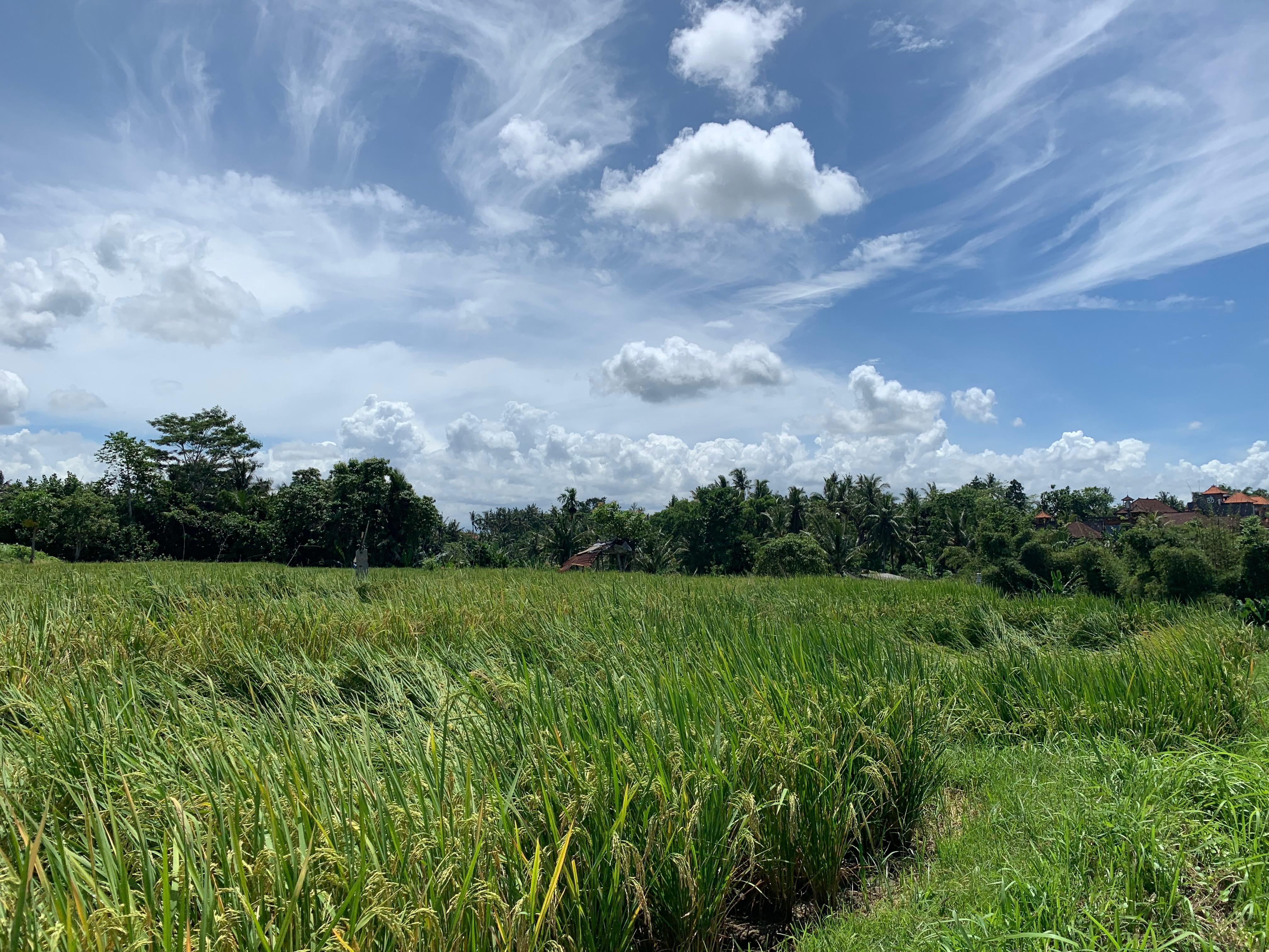 Bali: Yeryüzündeki Cennet